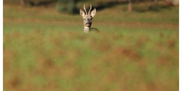 35-Jähriger schoss illegal hunderte Wildtiere