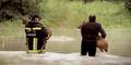 Kritzendorf: Dutzende Rehe von Insel gerettet