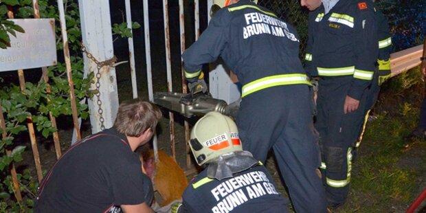 Feuerwehr-Großeinsatz für junges Reh