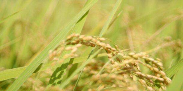 Schon 2020 werden Reis und Gemüse knapp