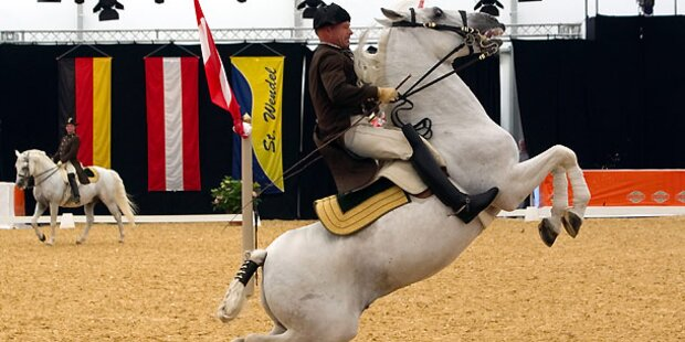 Wiener Hofreitschule: Tradition & Pferde