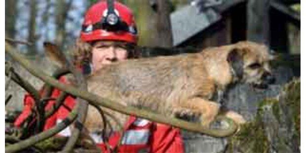 Rettungshunde trainieren für den Ernstfall
