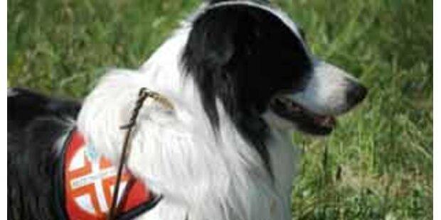 Österreichs Rettungshunde top