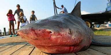 Ferieninsel macht Jagd auf Haie