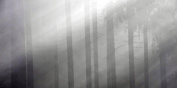 Rätselhafter Fund in Badener Wald