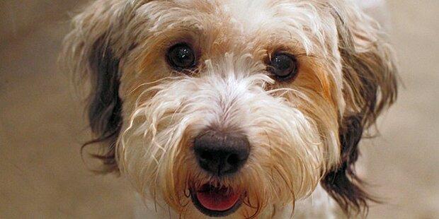 Hundehasser legt tödliche Köder aus