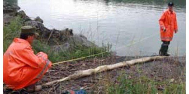 Tote Riesenschlange in der Enns gefunden