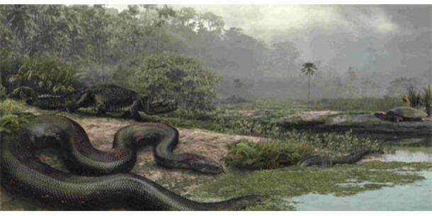 Größte Schlange der Welt entdeckt
