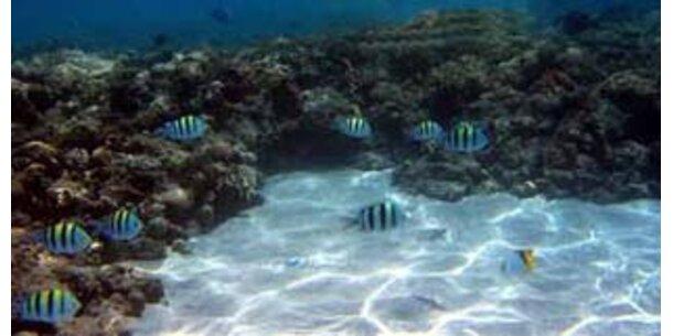Korallensterben schlimmer als angenommen