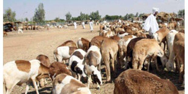 Rift Valley-Fieber wütet im Sudan: Fast 100 Tote