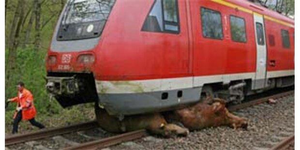 Wieder rast deutscher Zug in Tierherde