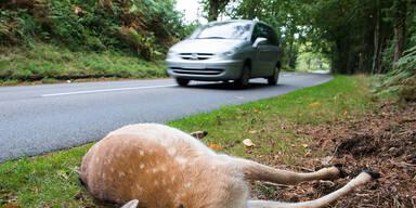 """""""Roadkill"""": Hoher tierischer Blutzoll auf Europas Straßen"""