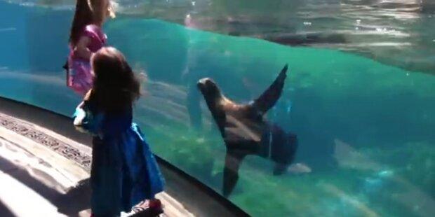Mädchen spielt mit süßer Robbe