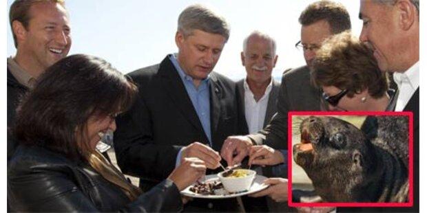Kanadas Premier verzehrt Robbenfleisch