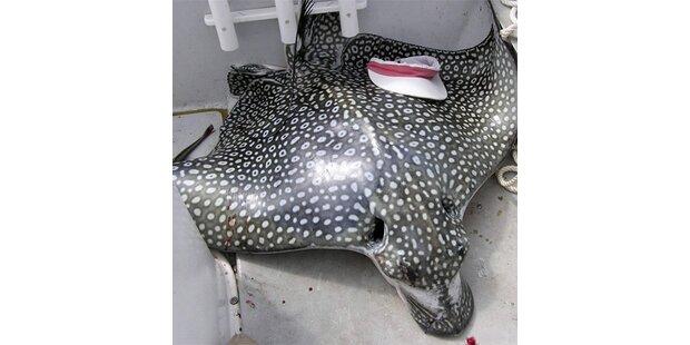 Frau in Florida beim Sonnen von Fisch getötet