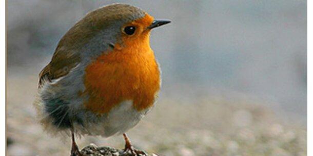 Stadtlärm verändert viele Vögel