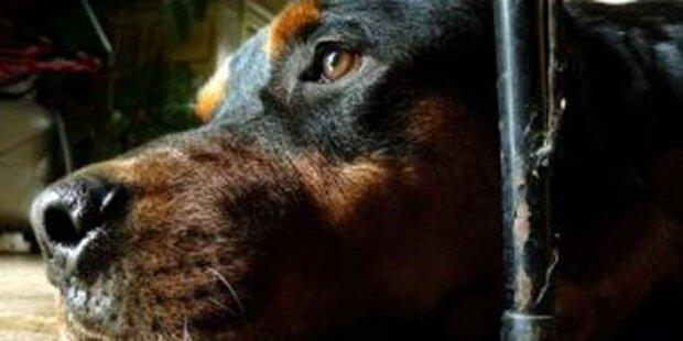 Rottweiler biss 3-jährigen Buben tot