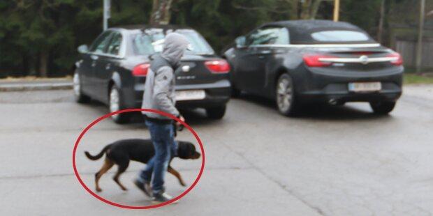 Rottweiler biss zwei Kinder im Innviertel