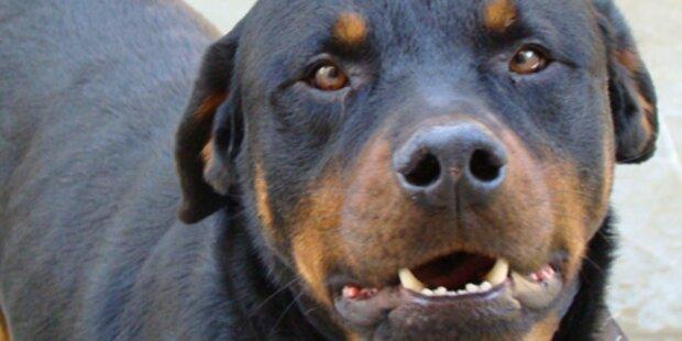 Hundebiss: Richter erklärt sich unzuständig