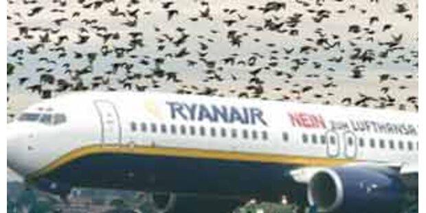 Notlandung wegen Vogel im Triebwerk