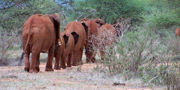 Safari-Abenteuer im Nationalpark