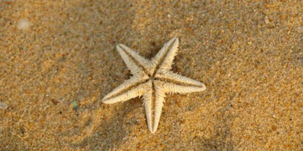 Sand am Meer wirkt wahre Wunder