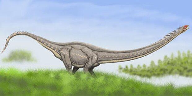 Riesensaurier liebten