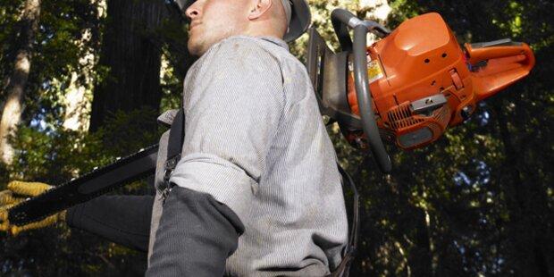 Arzt fällte unerlaubt Bäume der toten Nachbarin