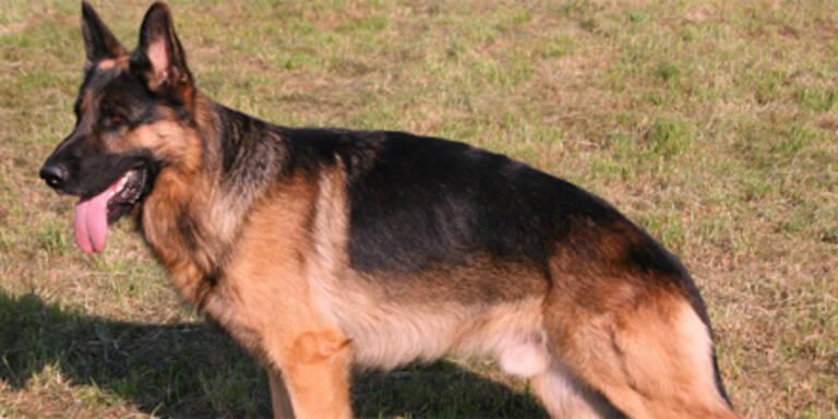 Hund lässt Sanitäter nicht zu Frauchen
