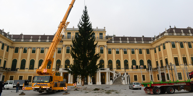 Weihnachtsbaum Schönbrunn