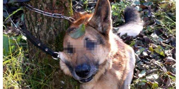 Steirer erhängt kranken Hund am Baum