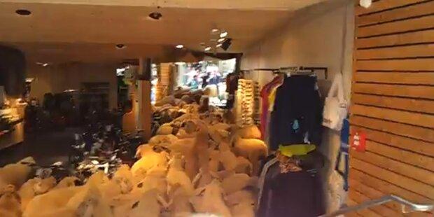 St. Anton: Schafe stürmen Sportgeschäft