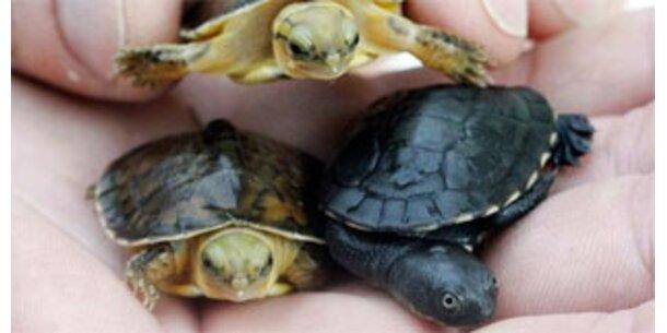 Der WWF geht gegen illegalen Tierhandel vor