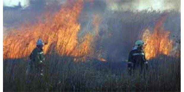 Großeinsatz bei Schilfbrand am Neusiedler See