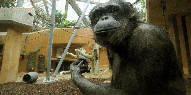 Schimpansen haben keine Menschenrechte