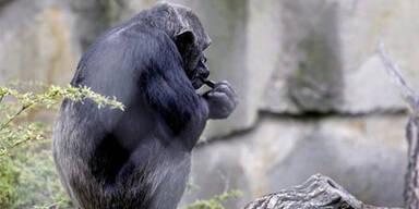 Zeigefinger von Zoodirektor amputiert