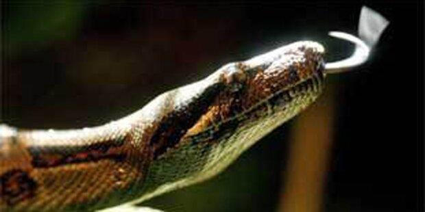 Mädchen auf Rax von Schlange gebissen