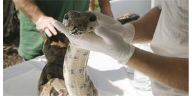 Schlange im Koffer - gebissen