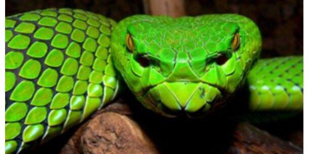 Zoo-Mafia verdient drei Milliarden Euro jährlich