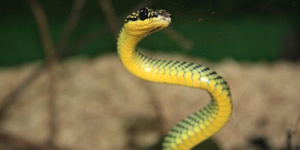Lust auf eine Schlangen-Massage?