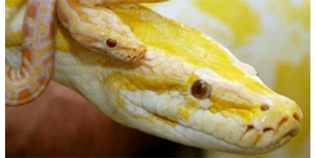 Australierin fand 14 Schlangen im Schlafzimmer