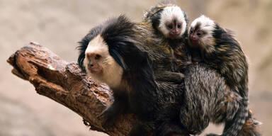 Süßer Nachwuchs im Zoo Schmiding
