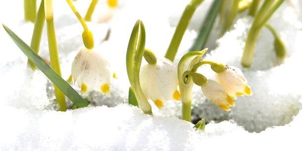 Warum Klimawandel Schnee bringen kann