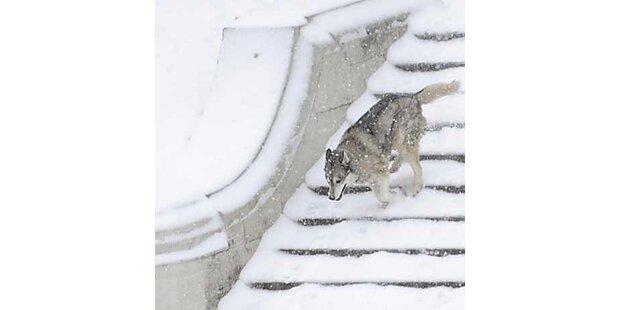 Schneewalze über Österreich