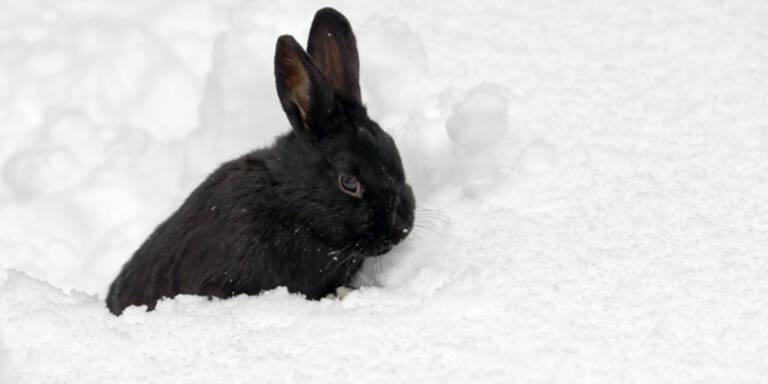 Winter gibt sich noch nicht geschlagen
