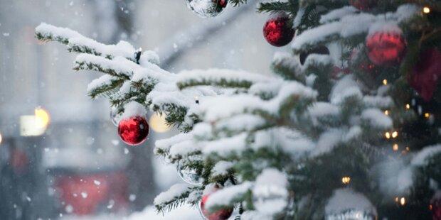 Wie sieht der Christbaum 2012 aus?