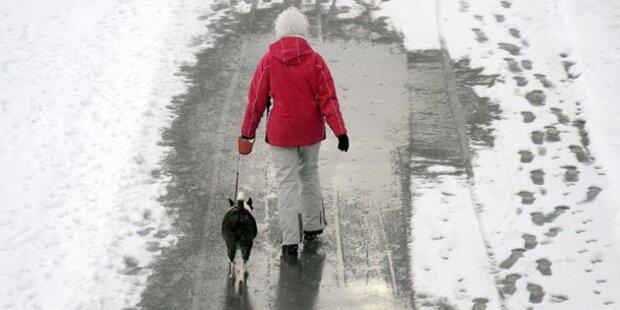 Hunde leiden im Winter