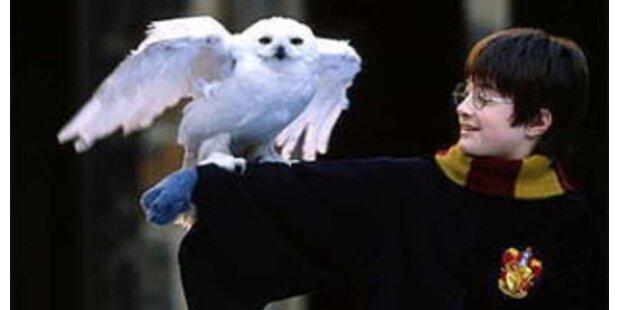 Immer mehr Harry-Potter-Eulen verwaisen