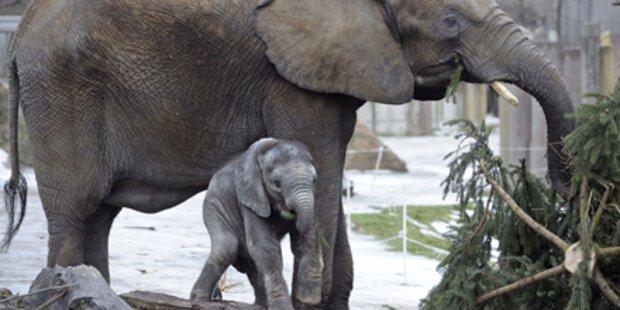 Schönbrunn ist bester Zoo Europas