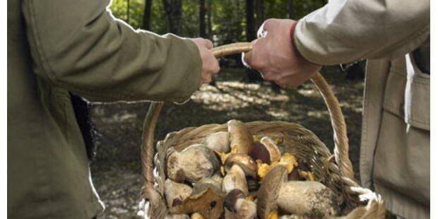 SOKO stellt 1,2 Tonnen Pilze sicher